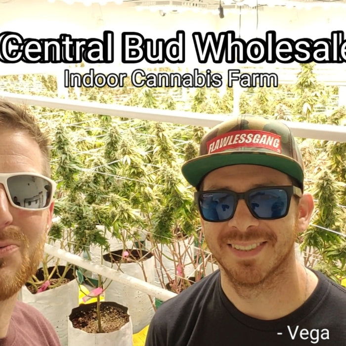 Central Bud Wholesale - Medical Cannabis Farm Tour