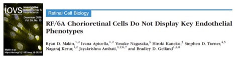 RF/6A Clorioretinal Cells lack endothelial cell phenotypes