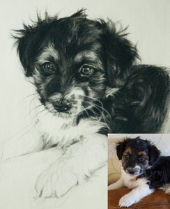 Pet Portraits Delivered in a Sealed Frame Mount. - James Murch Fine Art