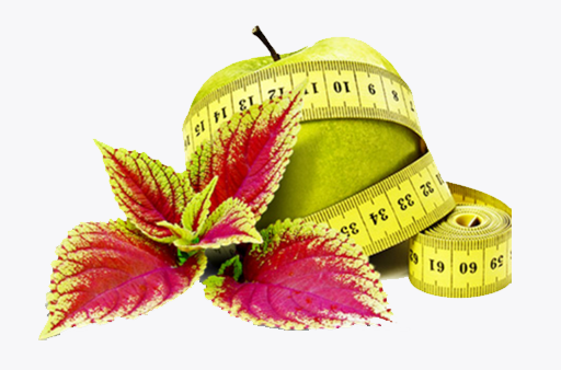 Forskolin: Your Next Favorite Weight Loss Supplement
