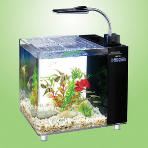 desktop aquarium with overhead light