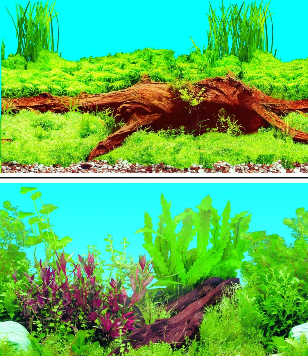 a double sided aquarium background with a large peice of bog wood surrounded by thick green plants on one side and a tropical green and red coloured plants on the other side