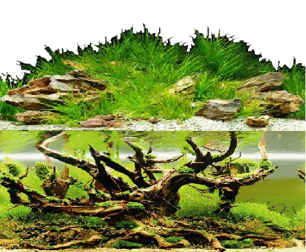 a double sided aquarium background with rocks, grasses and a sunken tree