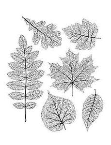 Tim Holtz Stampers Anonymous Cling Mount Stamps - Pressed Foliage Stamps Tim Holtz Other