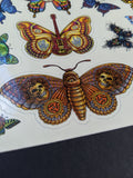 "Butterfly Sticker Sheet - 8"" x 10"""