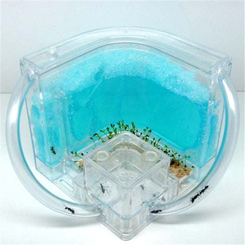 Novelty Ant Home Ant Villa + Ant Farm ecological toys ants home kids