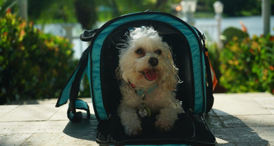 MUST HAVE TRAVEL CARRIER by gracieloumaltipoo