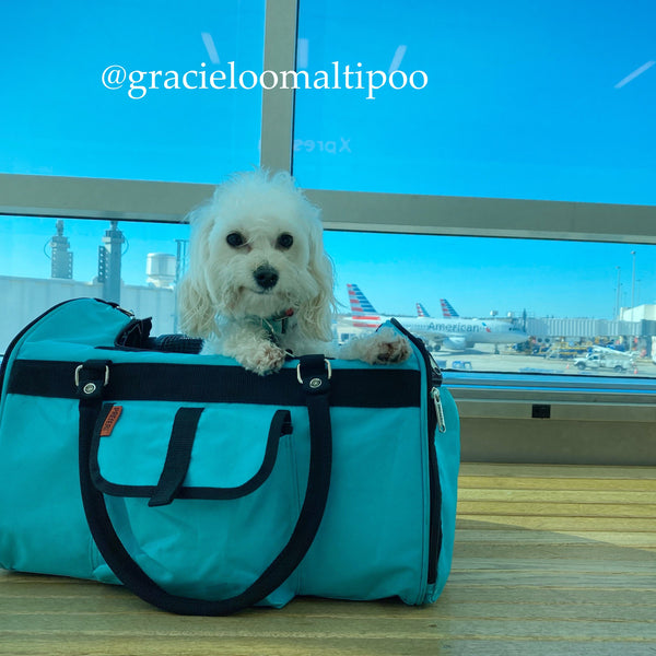 gracieloumaltipoo in Prefer Pets Hideaway Aqua Duffel Pet Carrier