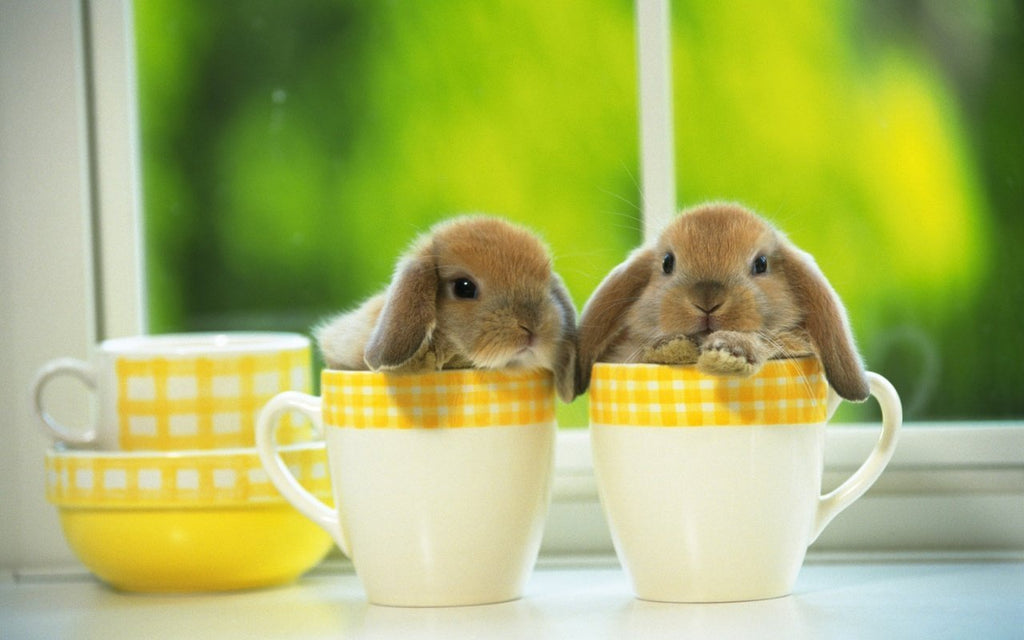 Popular Supplies for Pet Rabbits | Bunny Supply Co