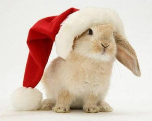 Pet Bunny Holiday Gift Ideas