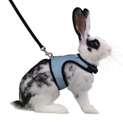 PET RABBIT CARE PRODUCTS
