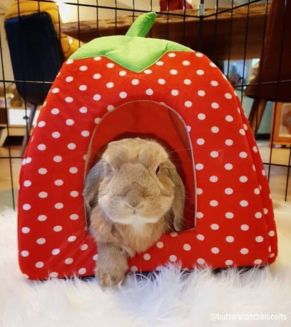 best bunny rabbit supplies, accessories, toys, cages, grooming, clothes to wear