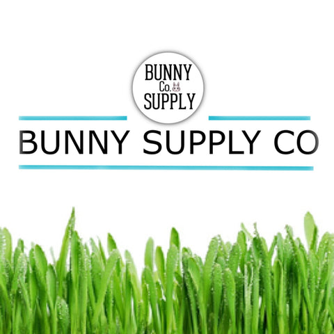 Best Rabbit Supplies, Products, or Accessories Online