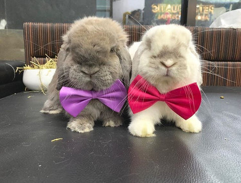 cute dress up accessories or costumes for pet rabbits or bunnies online - Bunny Supply Co.®️