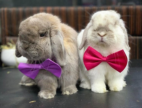 bunny bow ties or accessories for rabbits to wear - Bunny Supply Co.
