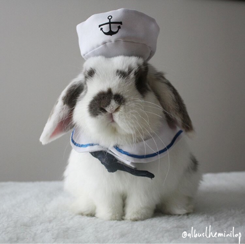 small pet bunny rabbit sailor outfit or hat - Bunny Supply Co.