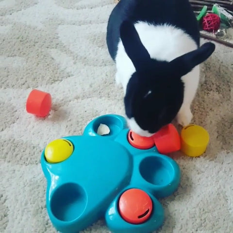 Best toys for pet rabbits or bunnies 2019 - Bunny Supply Co.