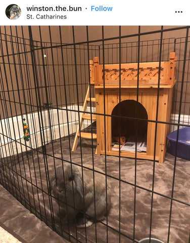 playtime fort for rabbits or bunnies online - Bunny Supply Co