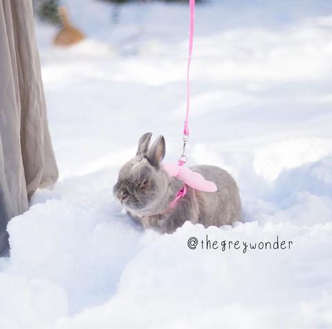small leashes for rabbits