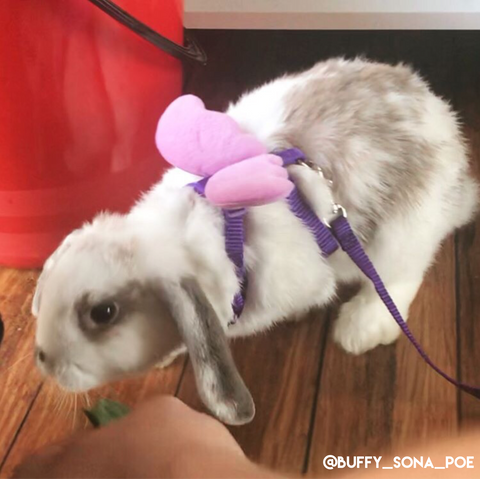purple leashes for bunnies