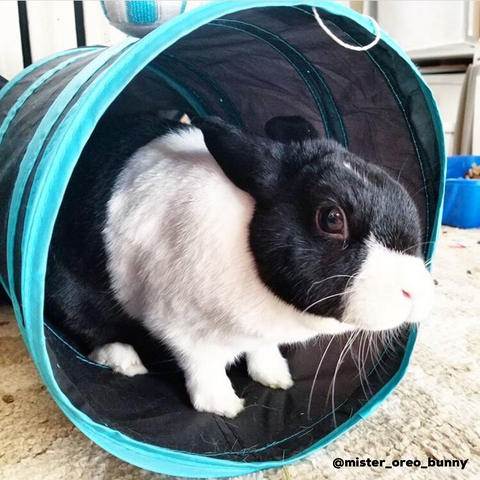 tunnel for a pet rabbit or bunny