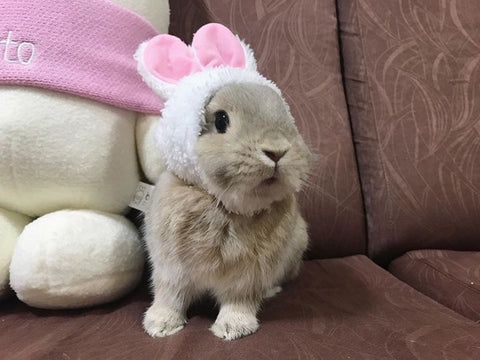 cute small hats for pet bunnies or rabbits to wear for sale online - bunny supply co.