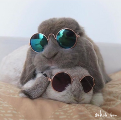 cute small pet sunglasses bunnies rabbits accessory