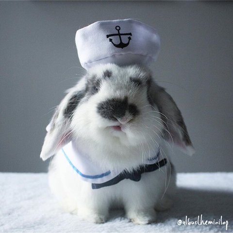 Sailor Costume Rabbit Hat | Bunny Supply Co