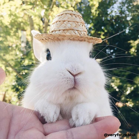 cute hats for bunnies to wear