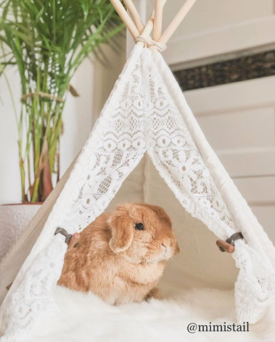 cute pet bunny or rabbit hideaway tents for sale online - Bunny Supply Co.