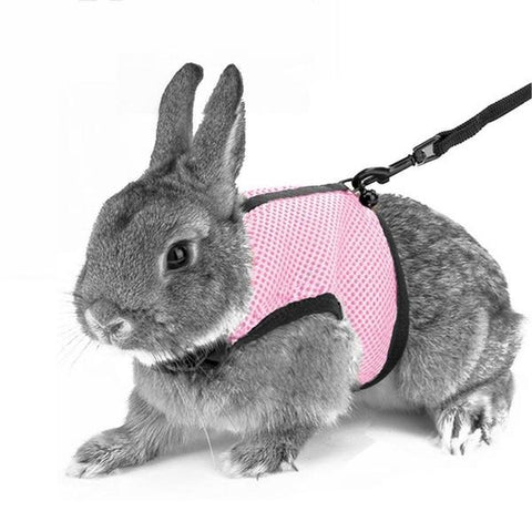 leashes for rabbits