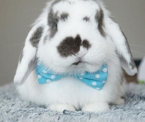 cute little bow ties for pet rabbits or bunnies to wear on sale at bunny supply co