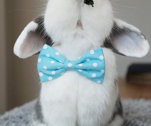 little bows or ties clothes for bunnies or rabbits for sale at bunny supply co