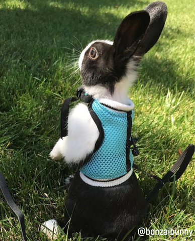 best bunny rabbit harness online 2019 free shipping - bunny supply co.