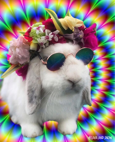 best bunny accessories or rabbit sunglasses