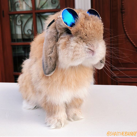 little sunglasses for rabbits or bunnies to wear