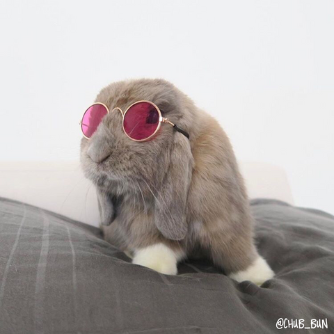 pet rabbit sunglasses online