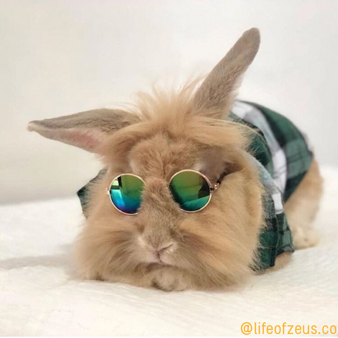 bunny rabbit sunglasses for sale online