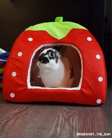 red fruit small pet house