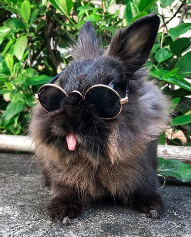 little sunglasses for bunnies or rabbits to wear - bunny supply co.