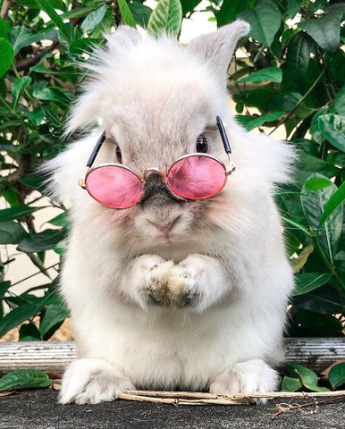 sunglasses for bunnies or rabbits - bunny supply co