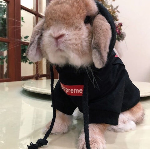 sweaters for rabbits or clothes for bunnies