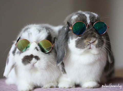 Sunglasses for Rabbits & Bunnies | Bunny Supply Co