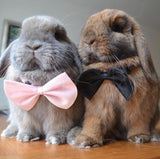 Bow-Ties for Bunnies & Rabbits - Bunny Supply Co.