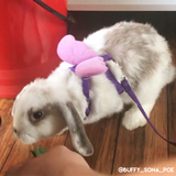 Angel Wings - Leash & Harness Combo - Bunny Supply Co.