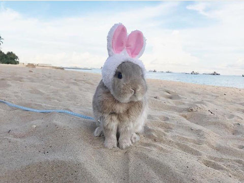 "Classic ""Bunny Ears Hat"" for Bunnies & Rabbits - Bunny Supply Co."