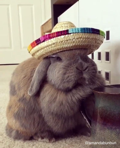 ChaChaCha Sombrero Hat for Bunnies & Rabbits - Bunny Supply Co.