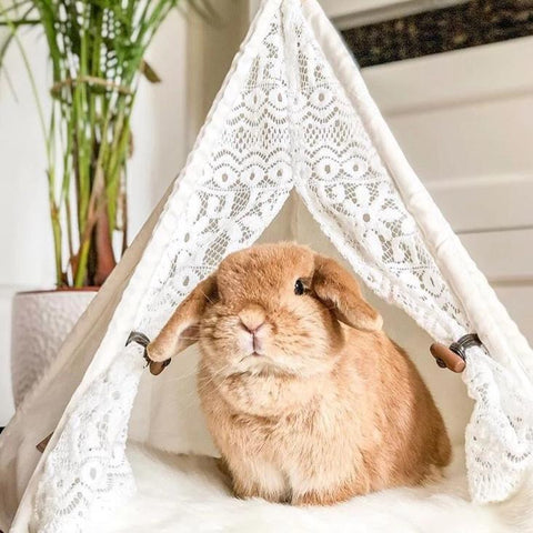 Premium House Rabbit Tent Hideaway - Bunny Supply Co.