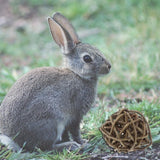 Fun Willow Toy for Pet Rabbits or Bunnies - Bunny Supply Co.
