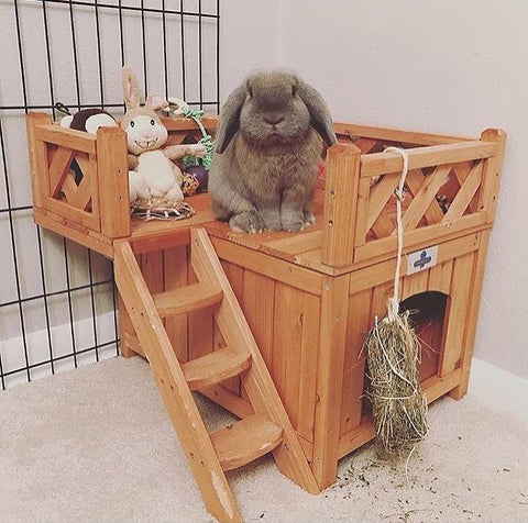Playtime Fort for Rabbits (Best-Seller) - Bunny Supply Co.